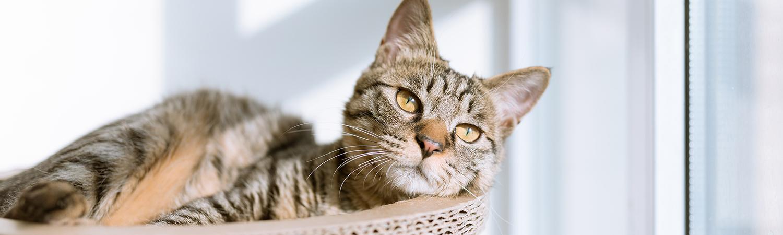 Kissa Pissaa Väärään Paikkaan
